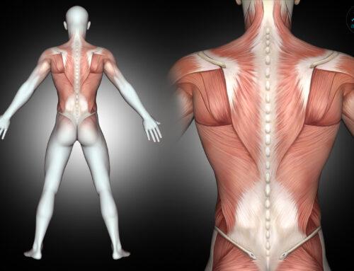 Dolori muscolari ed articolari: dall'inattività a posture sbagliate, cause e rimedi