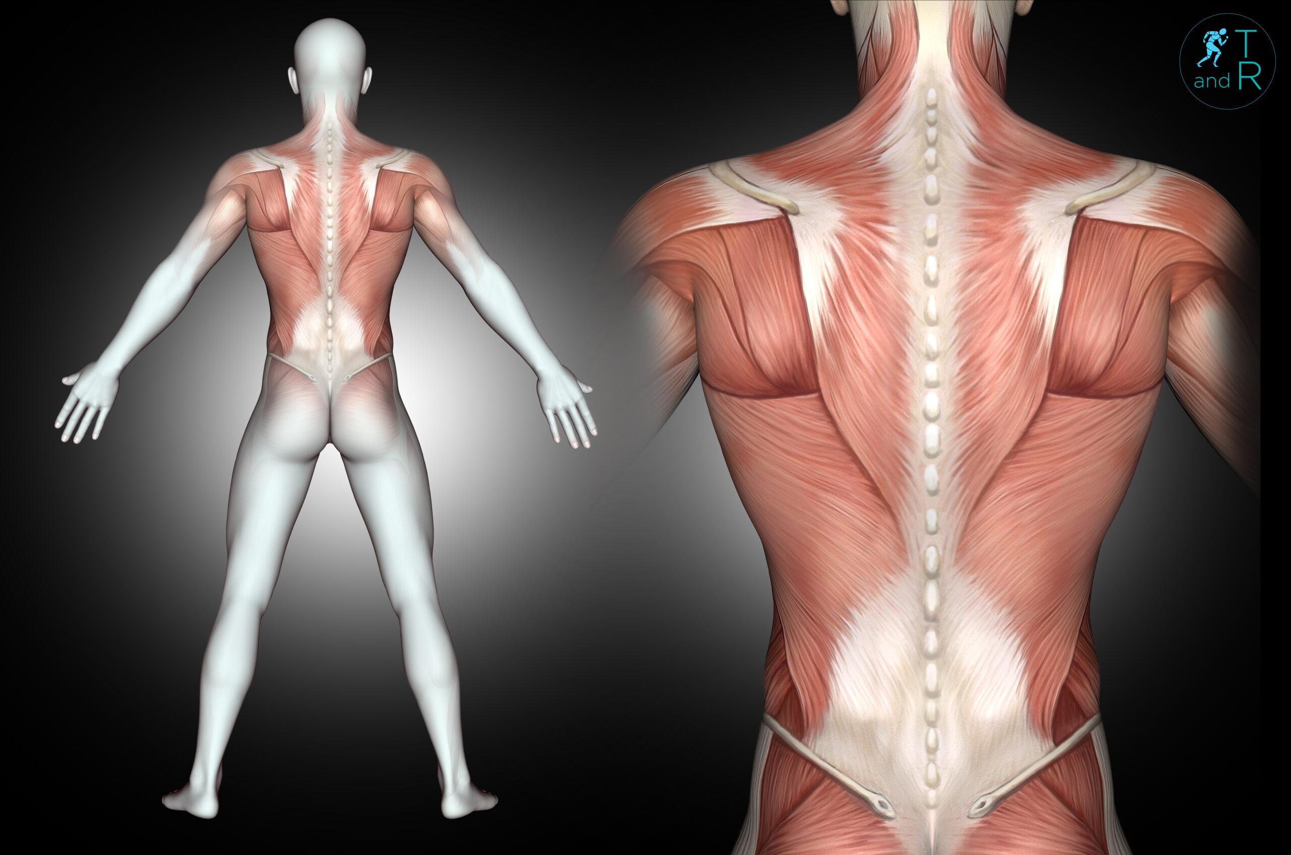 Come evitare dolori muscolari ed articolari